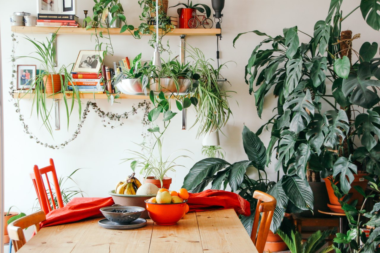 House Plants, yay or nay?